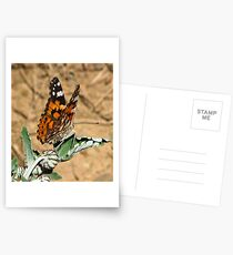 African Painted Lady Postkarten