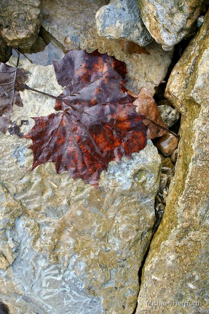 Leaf & Crack by Michael  Herrfurth
