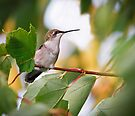 Hummingbird in Tree by Kenneth Keifer