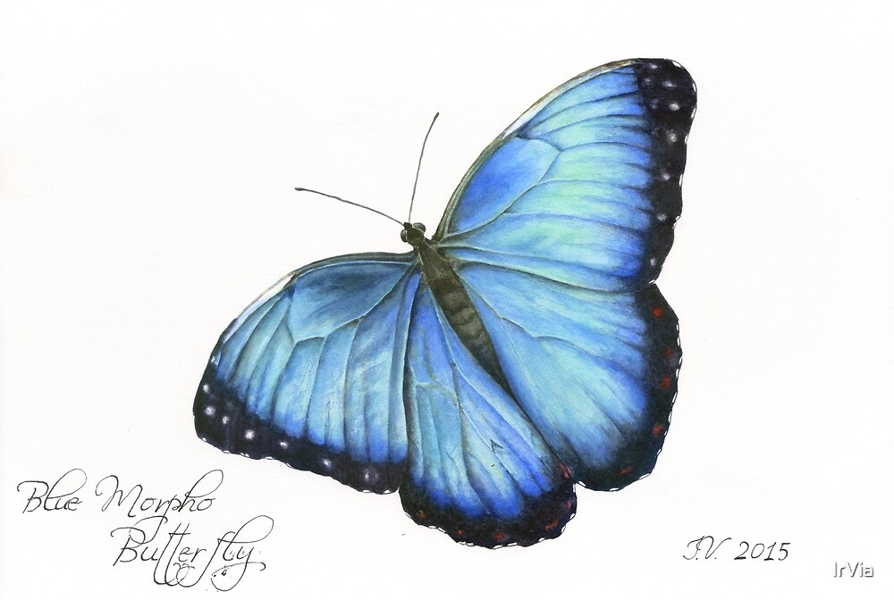 Blue Morpho Butterfly by IrVia