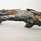 Wood by Jan Szymczuk