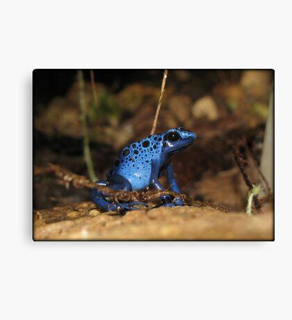 Poison Dart Frog ~ Sapphire Blue  Canvas Print