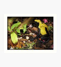 Dyeing Dart Frog Art Print