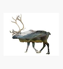 Reindeer Road to Homer Photographic Print