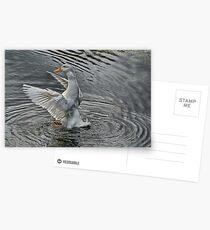 flapping Duck Postcards
