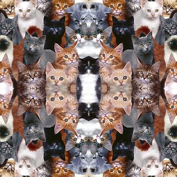 Kittens! OMG. So many kittens! Kittenware! by OMGIWantIt