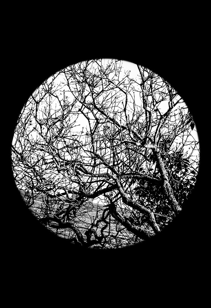 B&W Trees by Kat Kimball