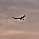 Raven Guide by Brenda Dahl