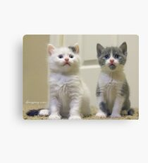 One of them is camera shy...guess which one?  Canvas Print