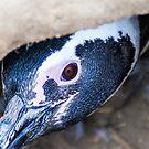 Eye-ing you by Guatemwc