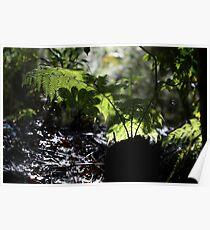 Rain forest undergrowth Poster