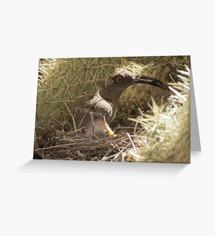 Curved-billed Thrasher with Gentle Babe Greeting Card