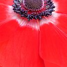 Anemone by Brian Haslam