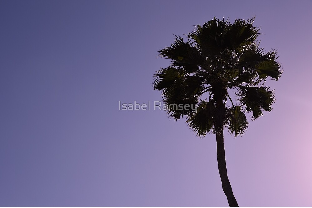 Palm Tree  by Isabel Ramsey