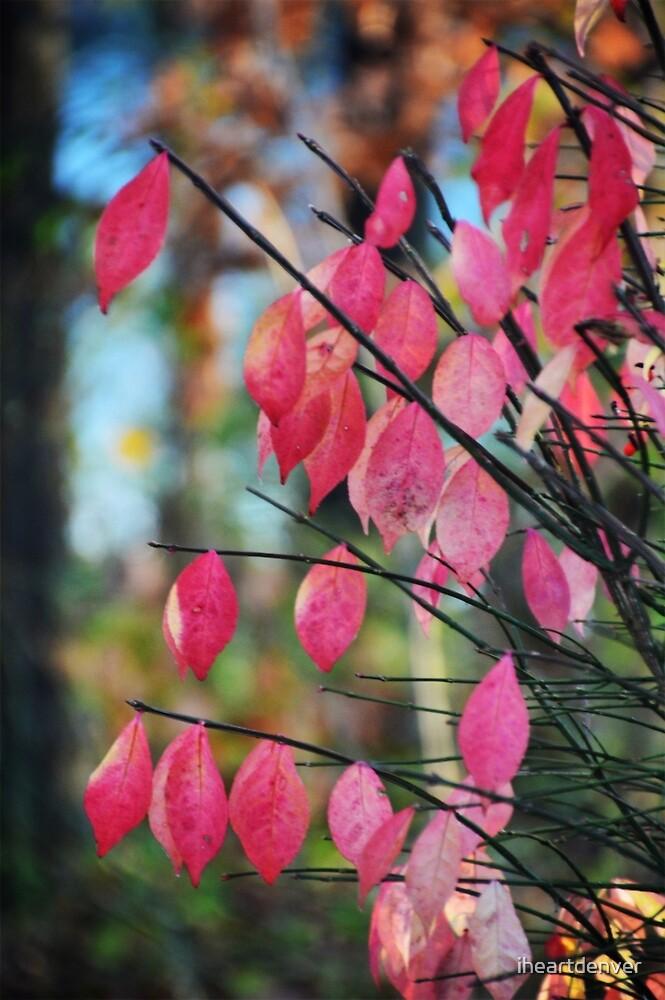Kaleidoscopic Leaves by iheartdenver