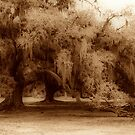 Louisiana Oak by leapdaybride
