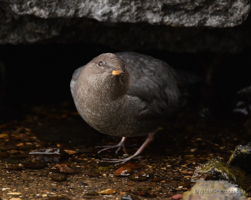 Out of the Dipper Cave by DWMMPhotography