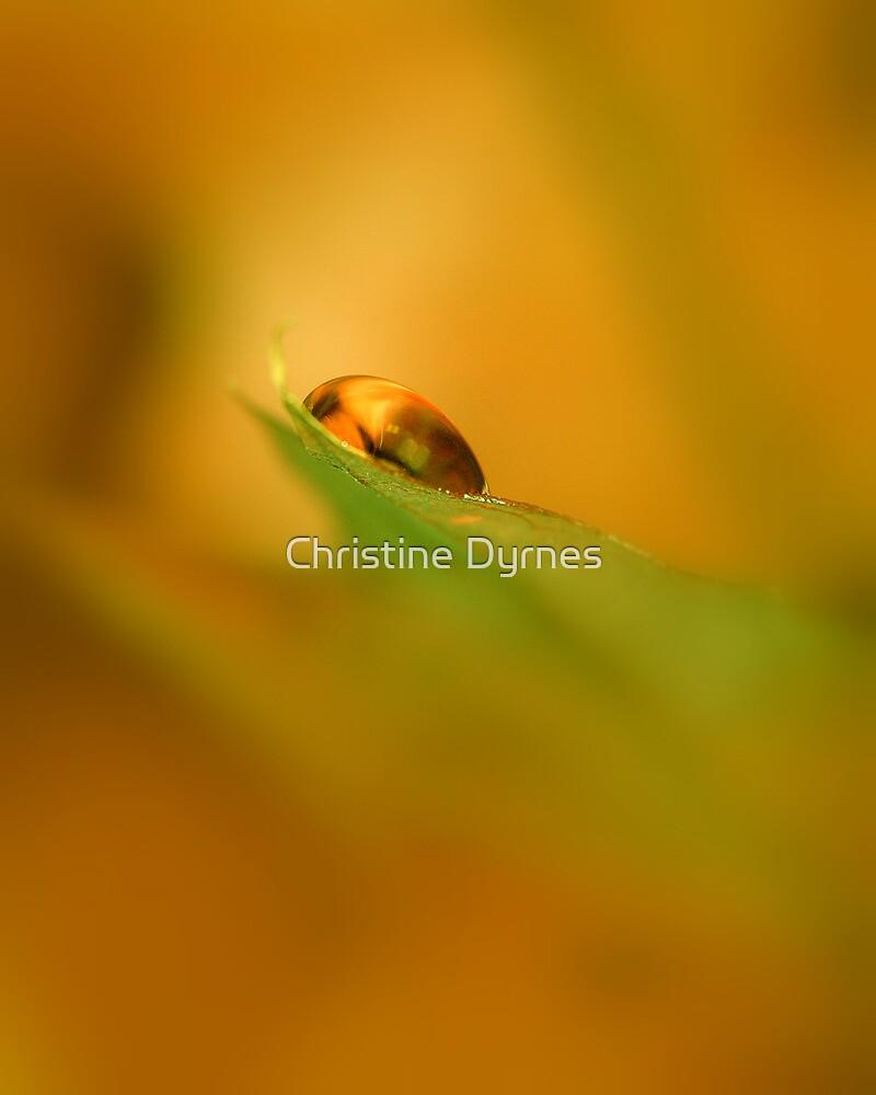 Soft Orange by Christine Dyrnes