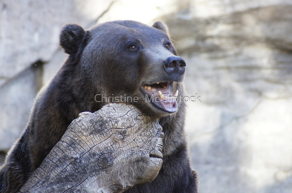 Beary Happy by Christine  McClintock