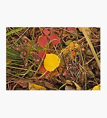The Aspen Leaf Photographic Print
