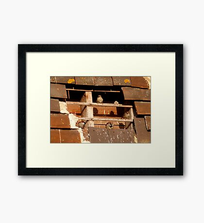 Squatters Rights Framed Print