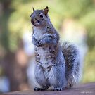Please M'am...More Peanuts by Mikell Herrick