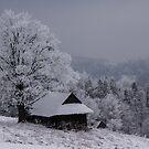 Winter by AJM Photography