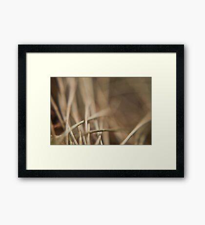 Casuarina Needles Abstract Framed Print
