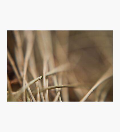 Casuarina Needles Abstract Photographic Print