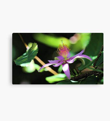 Lavender Starflower - Sun & Shadows Canvas Print