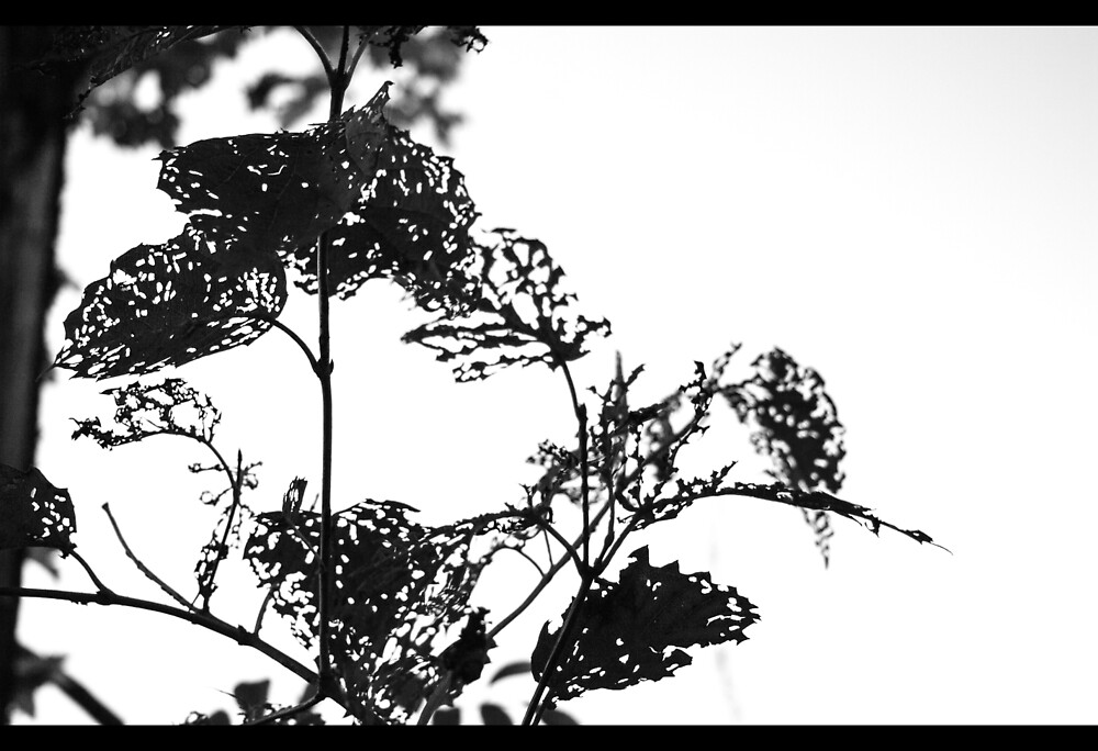 B&W Leaves by Kat Kimball