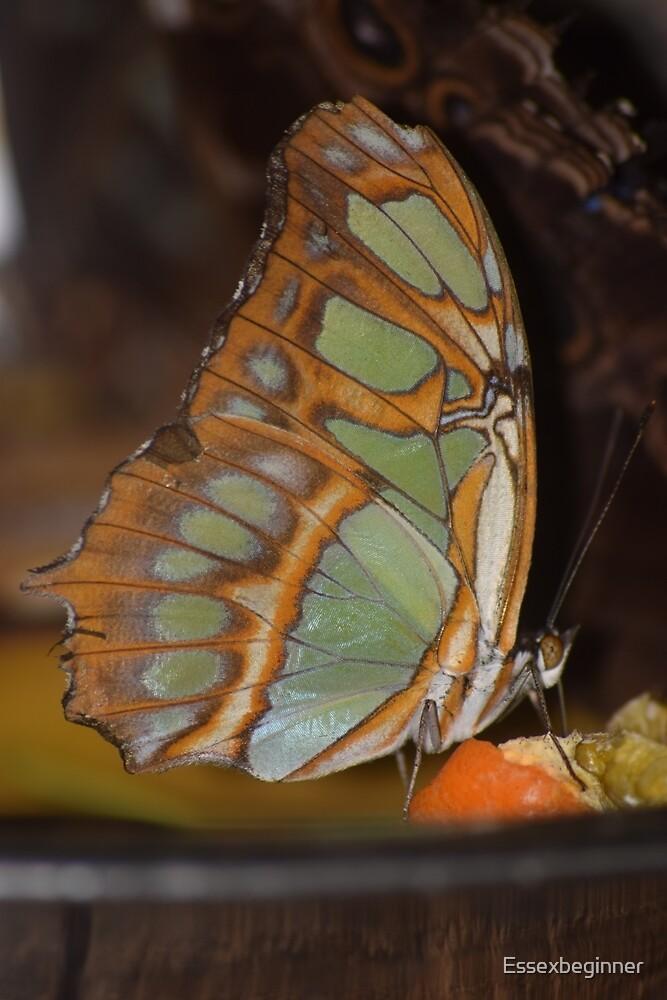 Tropical Wings in winter by Essexbeginner