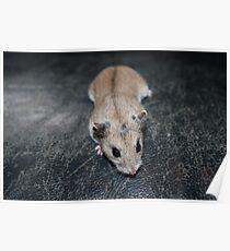 Diglett The Hamster 4 Poster