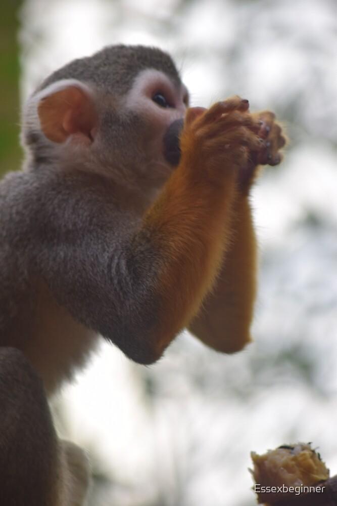 Monkey time 2 by Essexbeginner