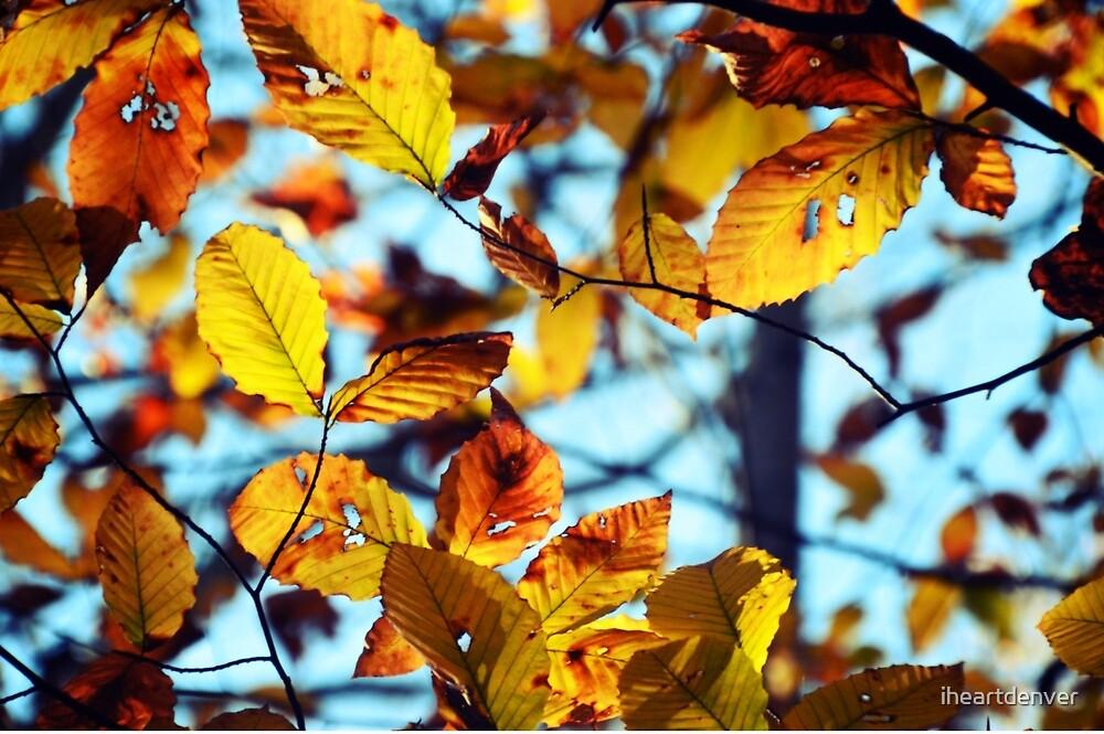 Amber Leaves by iheartdenver