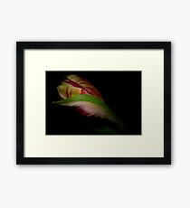 Tulip delight Framed Print