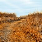 Mysterious Prairie by Brian Gaynor