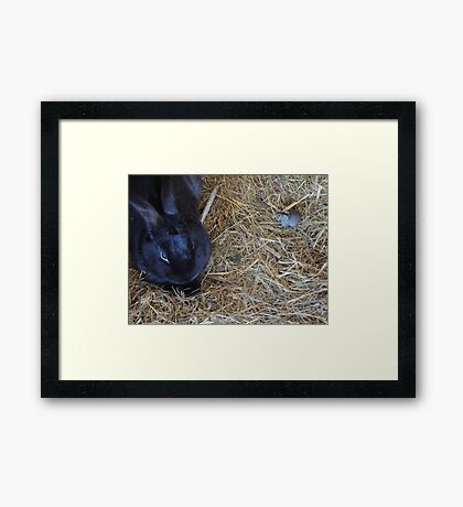 Friends in the Hutch Framed Print