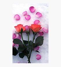 Snow Roses Photographic Print
