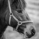 Horse by Martina Fagan