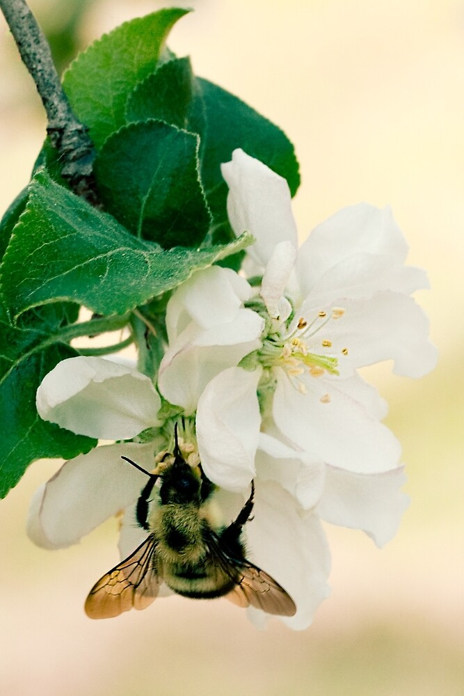 Apple and Bumble by Megan Campbell