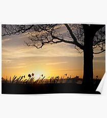 Sunset Daffs Poster