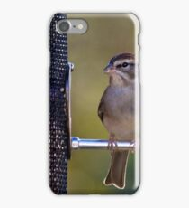 Chipping Sparrow iPhone Case/Skin