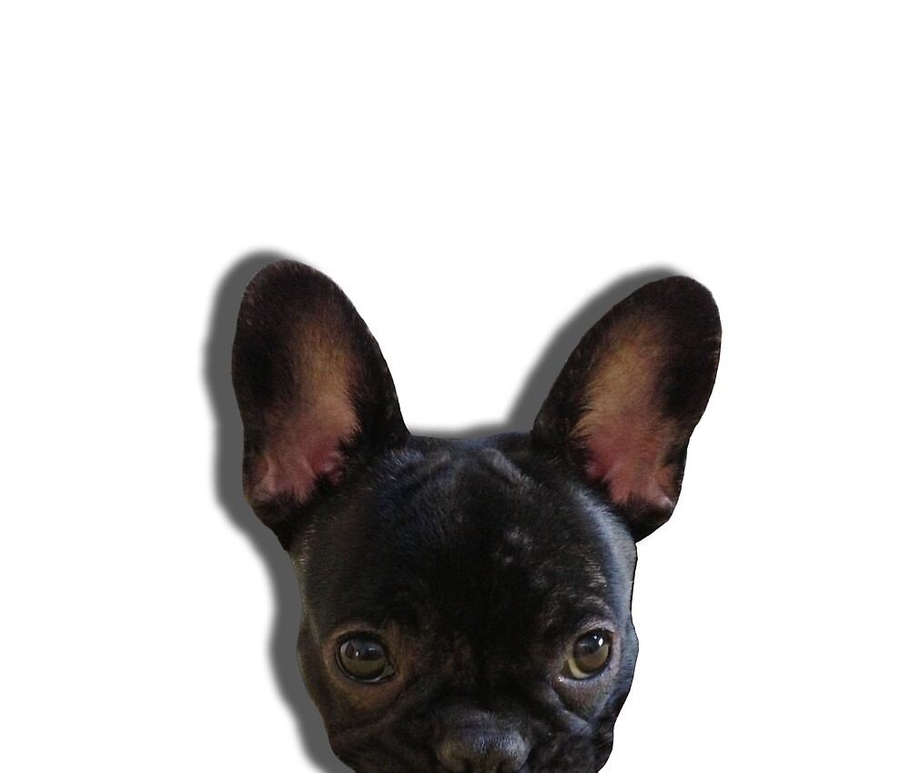 French Bulldog Peekaboo by umeimages