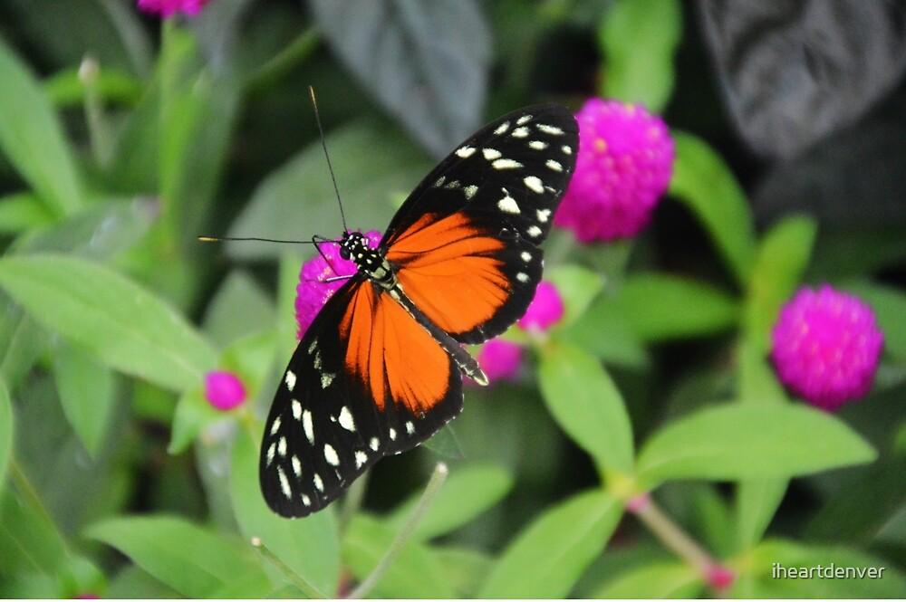 Orange Butterfly by iheartdenver