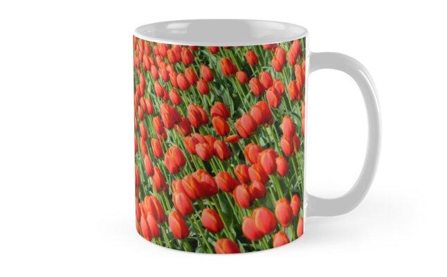 Colorful tulip farm by perlphoto