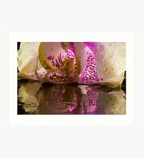 Rainy Orchid Art Print