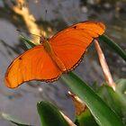 Orange Butterfly by ienemien