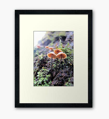 Rainforest No.2 Framed Print