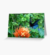Great Mormon Butterfly Greeting Card